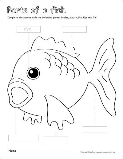 Parts Of A Fish Coloring Sheets