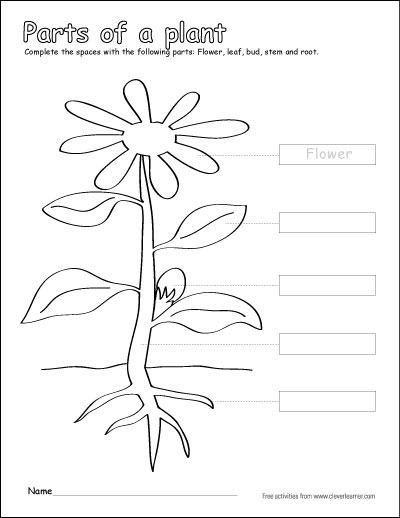 Parts Of A Plant Coloring Sheets