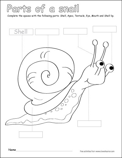Parts Of The Snail Coloring Sheets