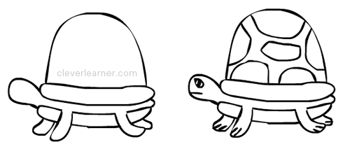 Step By Step Drawing Of A Tortoise