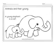 Animals and the names of their young ones worksheets for preschools