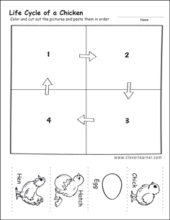 photo regarding Life Cycle of a Chicken Printable named Daily life cycle worksheets for preschools