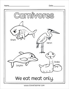 what are herbivores carnivores and omnivores activity sheets for preschools. Black Bedroom Furniture Sets. Home Design Ideas