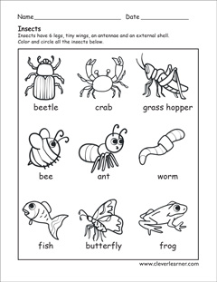what is an insect worksheets for preschools. Black Bedroom Furniture Sets. Home Design Ideas