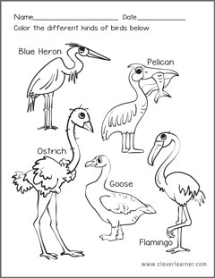 types of birds coloring pages - photo#5