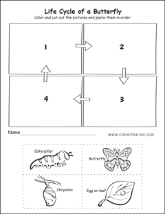 Life Cycle Of A Butterfly Activity Worksheet also  on kindergarten erfly worksheet for sequencing