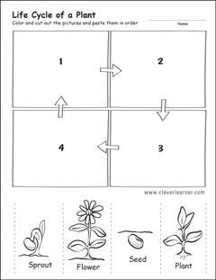 Life cycle worksheets for preschools