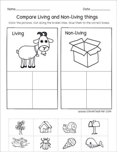 Compare Living And Non Things Preschool Worksheet