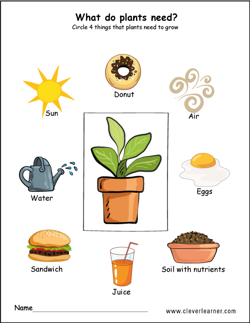 What Plants Need To Grow Worksheets For Preschools. What Plants Need Worksheet For Children. Kindergarten. Where Animals Live Worksheets For Kindergarten At Clickcart.co