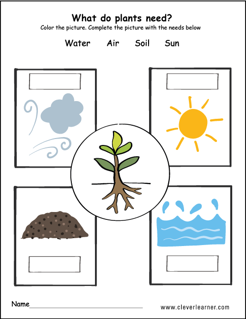 What plants need to grow worksheets for preschools
