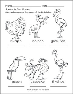 Kinds of birds worksheets for preschools