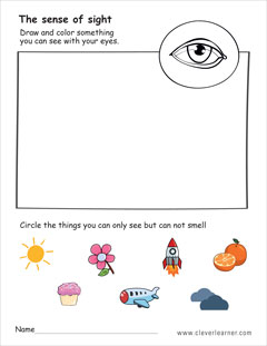 The five senses worksheets for preschools