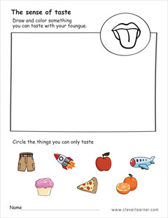 The five senses worksheets for