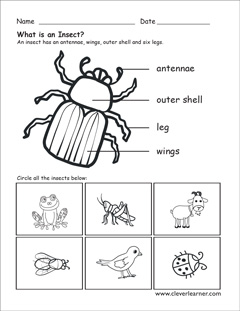 insect worksheet the best and most comprehensive worksheets. Black Bedroom Furniture Sets. Home Design Ideas
